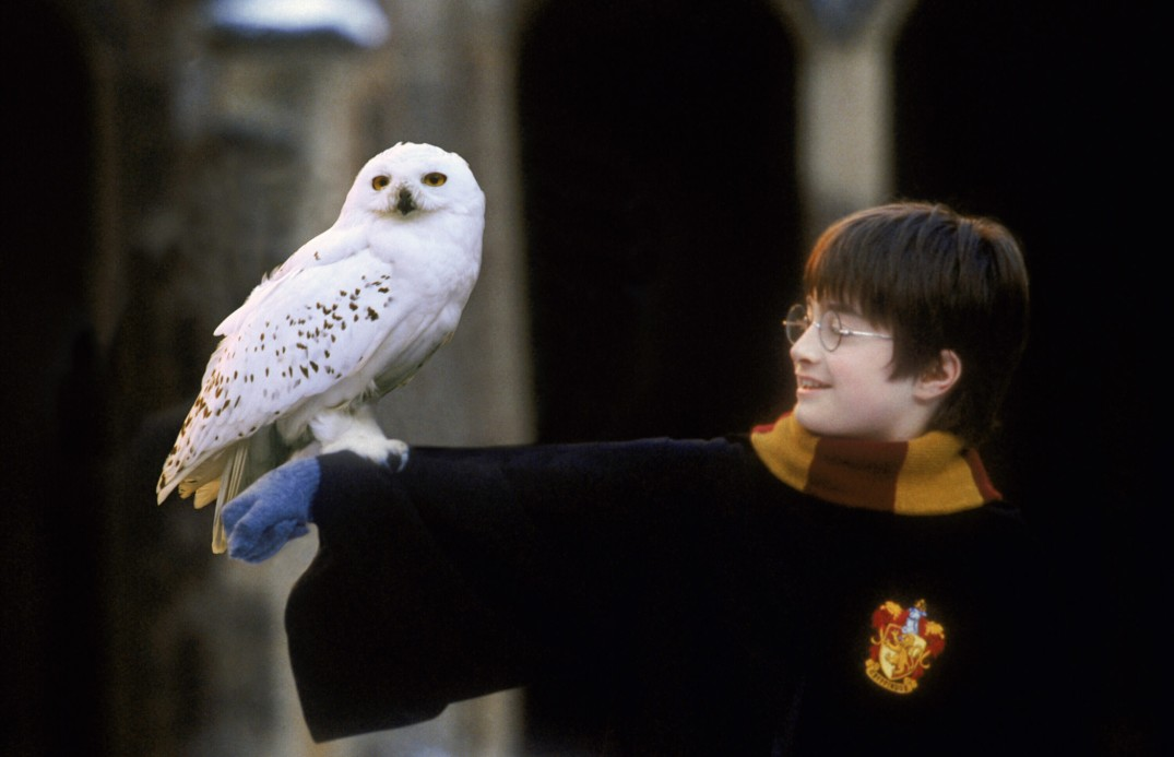 Harry_Potter_and_Hedwig.jpg