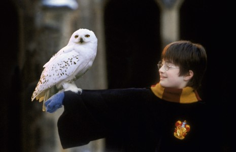Harry_Potter_and_Hedwig