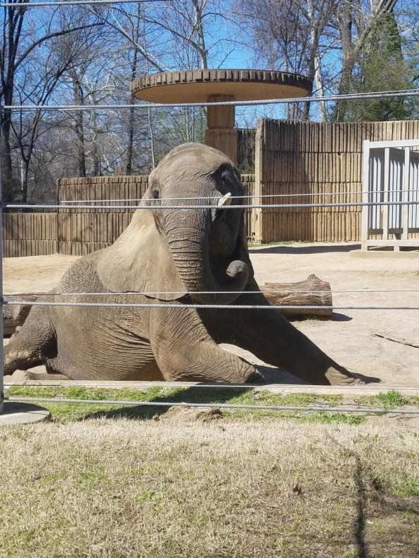 memphis-elephant