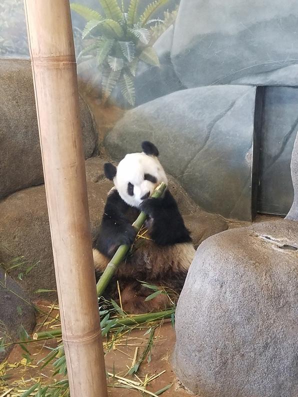 memphis-panda